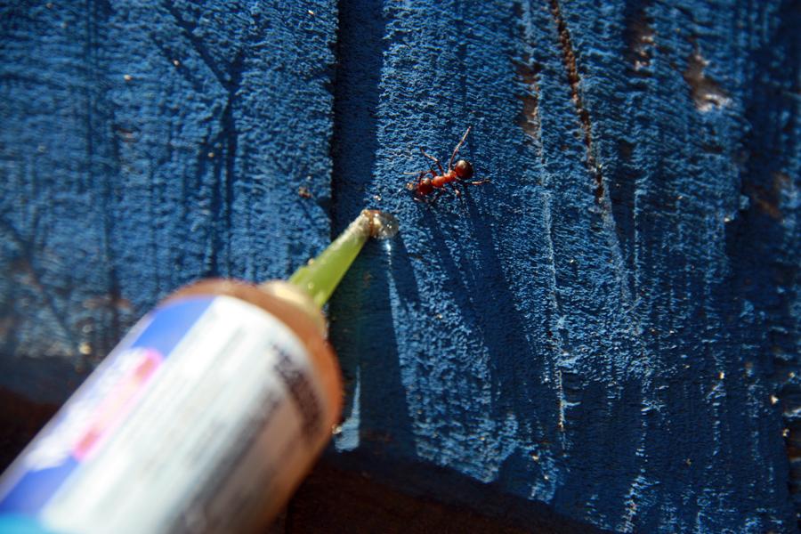 Aplikace nástrahy na mravence venkovního